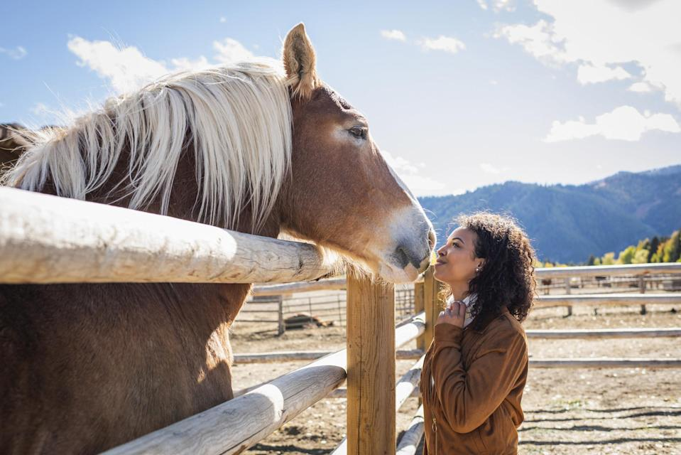 A palomino horse leaning its head over a fence post close to a woman standing on the other side, mountains in the background