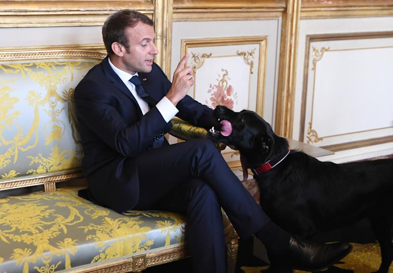French president Emmanuel Macron gestures towards his dog Nemo during a meeting with German Vice Chancellor and German Foreign Minister at the Elysee presidential Palace in Paris, France, Wednesday, Aug. 30, 2017. (Alain Jocard/Pool Photo via AP)