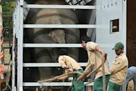 Kaavan is placed in his crate in Pakistan, for the journey to Cambodia
