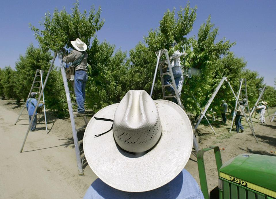 California Pesticide Lawsuits (Copyright 2017 The Associated Press. All rights reserved.)