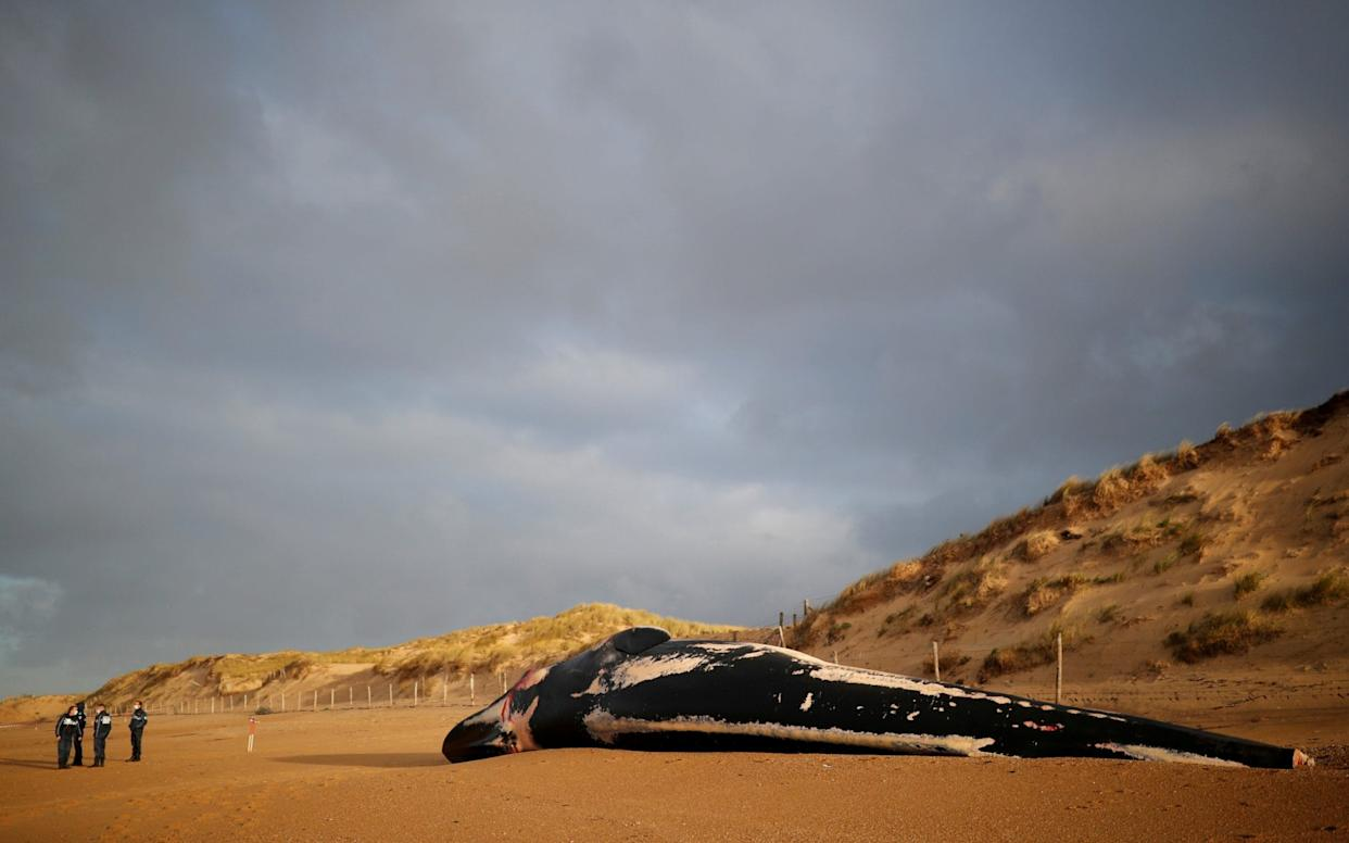 Fin whales are the second largest species of whale - REUTERS