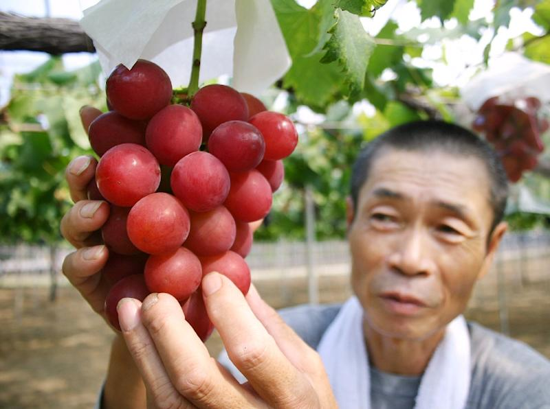 """The record-setting bunch of 26 """"Ruby Roman"""" grapes was the highest-priced at this year's first auction in Kanazawa, 300 kilometres (180 miles) northwest of Tokyo, smashing the previous record of 550,000 yen set last year"""