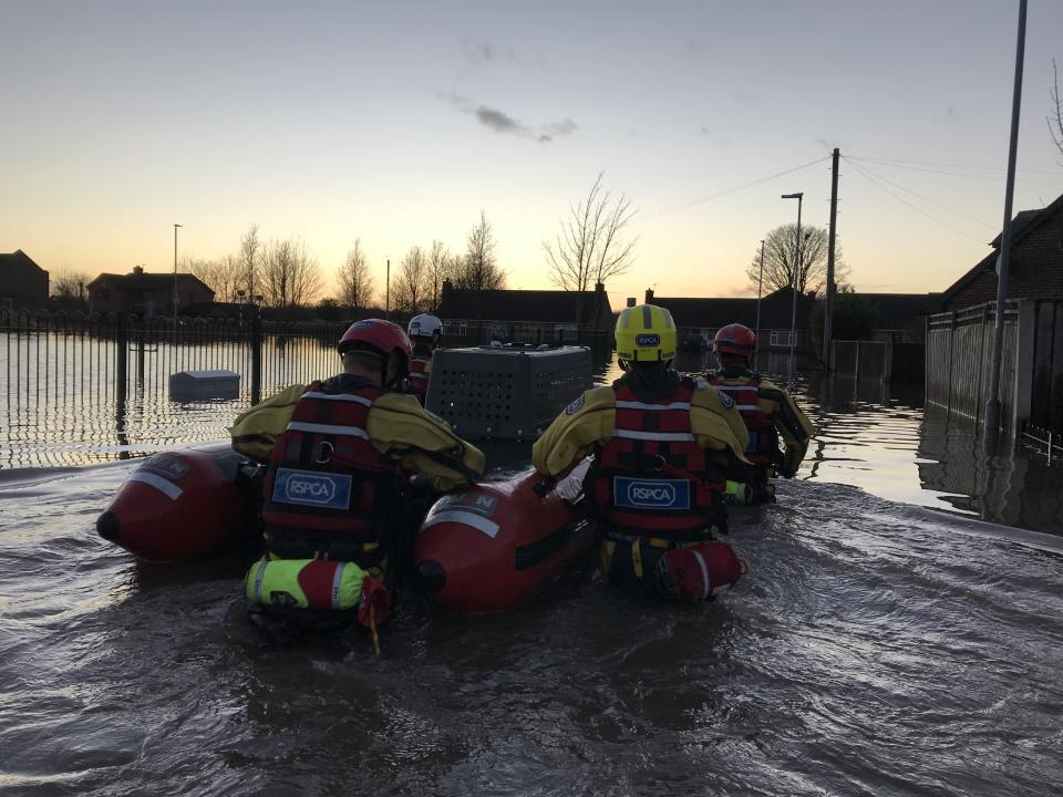 The RSPCA team wade through floodwater (RSPCA)