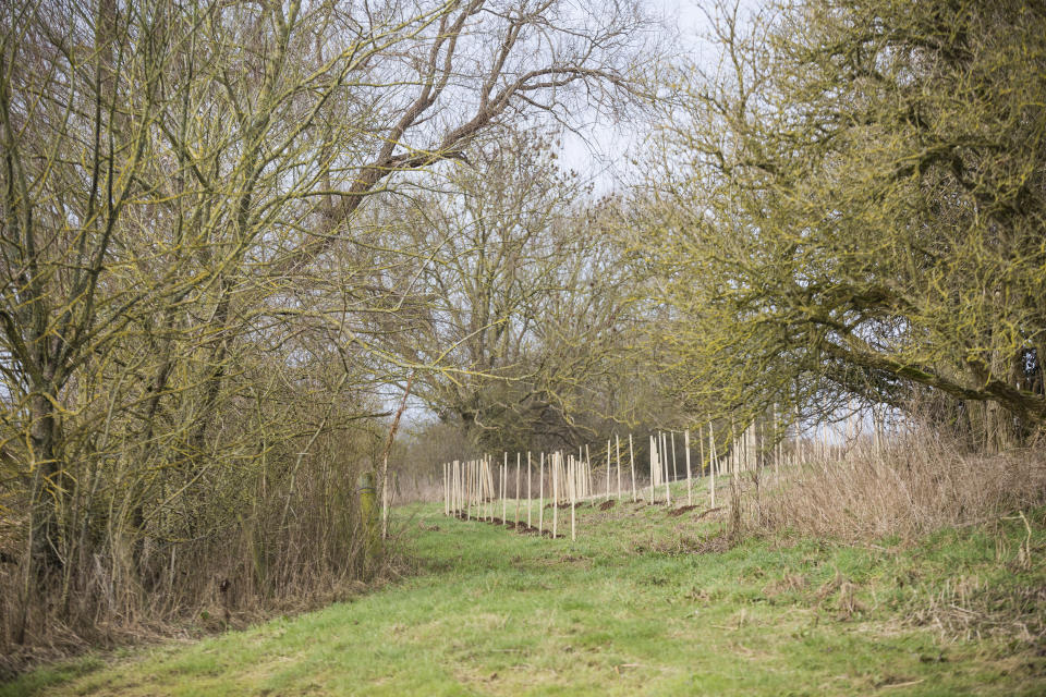 One of the initial projects is tree planting at Kingston Lacy, Dorset