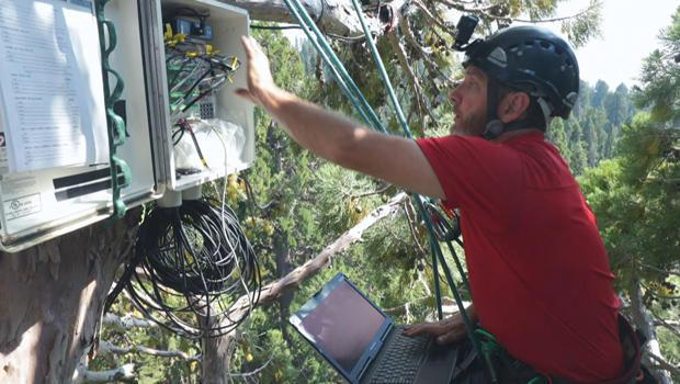 anthony-ambrose-collects-data-from-station-installed-in-canopy-of-giant-sequoia-tree-620.jpg