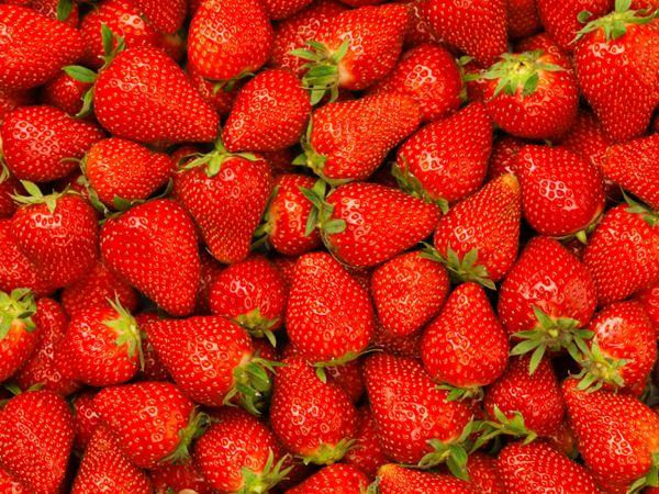 <p><strong>Strawberries</strong><br /><strong>Calorie count</strong>: 5<br /><strong>How Much</strong>: 1<br /><strong>Benefits</strong>: These juicy and yummy fruits prevent diabetes and heart diseases.</p>