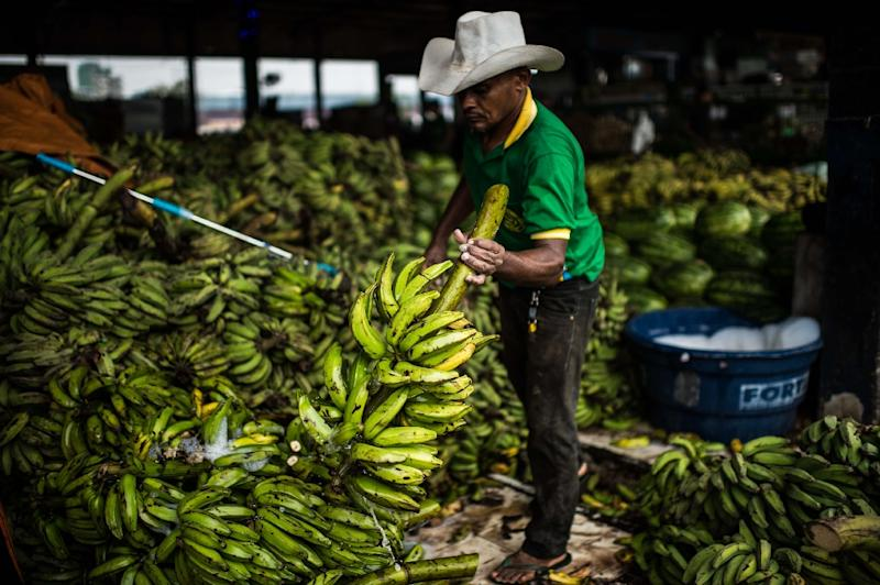 A banana seller cleans his fruits at the market in Manaus on December 11, 2015 (AFP Photo/Christophe Simon)