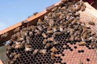 Australian producers deny there is a difference in the quality of their honey
