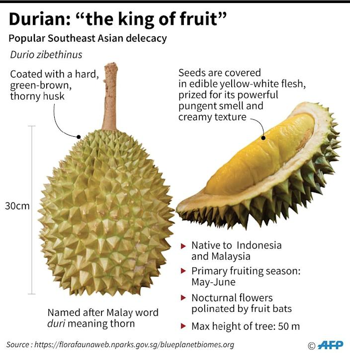 Factfile on the popular pungent Southeast Asian fruit Durian. (AFP Photo/Laurence CHU)