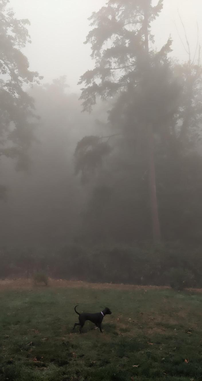 Smoke from Oregon fires fills a backyard. (Courtesy of Dr. Ashley Bourgeois)