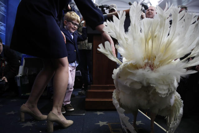 <p>Huck, 4, the son of White House Press Secretary Sarah Huckabee Sanders, looks at Wishbone, one of two turkeys set to be pardoned by President Donald Trump, with his mother during a preview of the foul to the media, Tuesday, Nov. 21, 2017, at the White House briefing room in Washington. (Photo: Jacquelyn Martin/AP) </p>