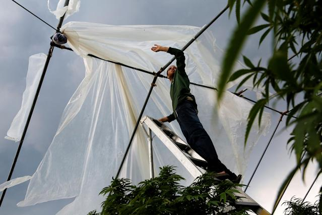 <p>With a plume of volcanic emissions, or laze (a term combining lava and haze), rising above him, Josh Doran, 22, repairs one of his family's greenhouses on the outskirts of Pahoa during ongoing eruptions of the Kilauea Volcano in Hawaii, June 7, 2018. (Photo: Terray Sylvester/Reuters) </p>