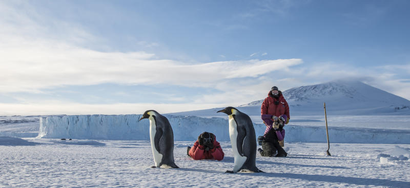 A group of people shoot photos emperor penguins in the Ross Sea near McMurdo Station, Antarctica.