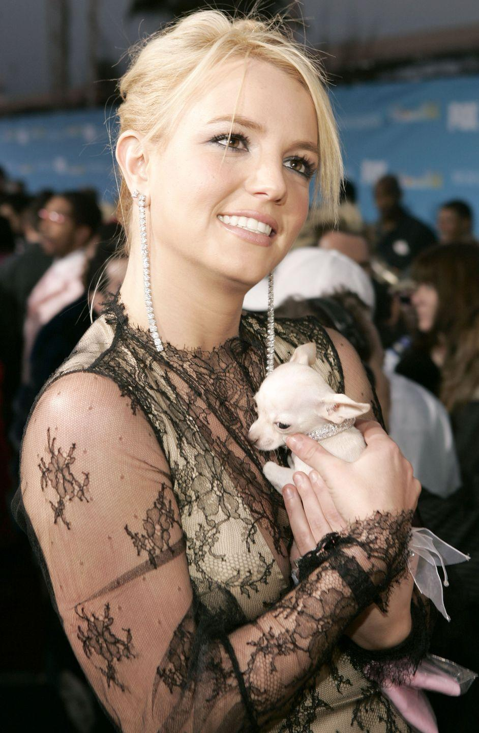 <p>Oh, no biggie, just Britney on the red carpet at the 2004 Billboard Music Awards with a tiny puppy—a.k.a. the best accessory of all.</p>