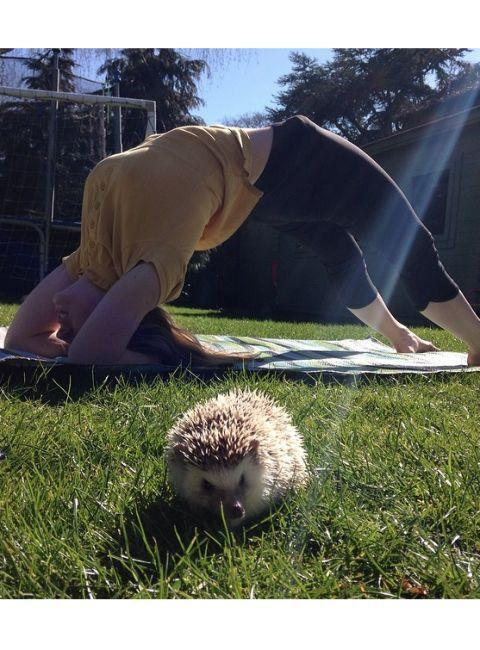 "<p>Even the spiniest of animals can benefit from some <a href=""http://www.drozthegoodlife.com/fitness/flexibility/a731/yoga-stretches-for-desk-sitters/"" rel=""nofollow noopener"" target=""_blank"" data-ylk=""slk:posture-fixing poses"" class=""link rapid-noclick-resp"">posture-fixing poses</a>.</p>"