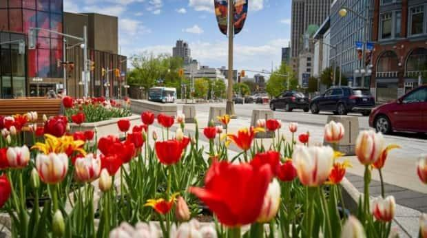 Tulips bloom at the National War Memorial at the northern end of Elgin Street in Ottawa in mid-May 2021.