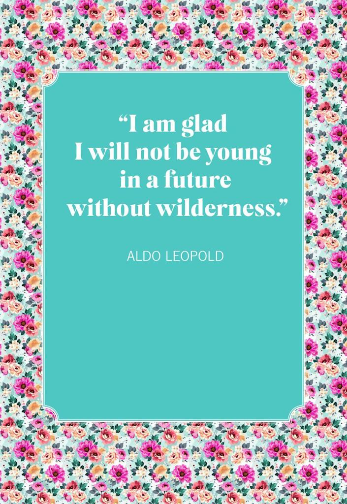 """<p>""""I am glad I will not be young in a future without wilderness.""""</p>"""