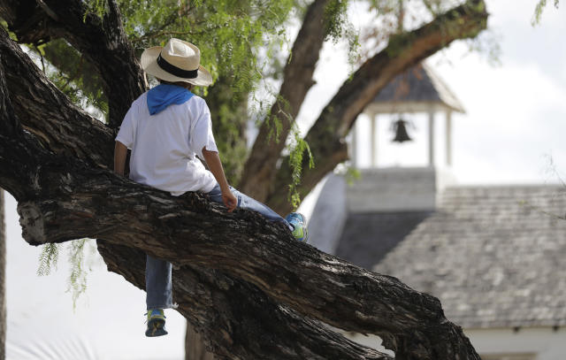 A young boy sits in a tree next to La Lomita Chapel where hundreds gathered to oppose the wall the U.S. government wants to build on the river separating Texas and Mexico, Saturday, Aug. 12, 2017, in Mission, Texas. The area would be the target of new barrier construction under the Trump administration's current plan. (AP Photo/Eric Gay)