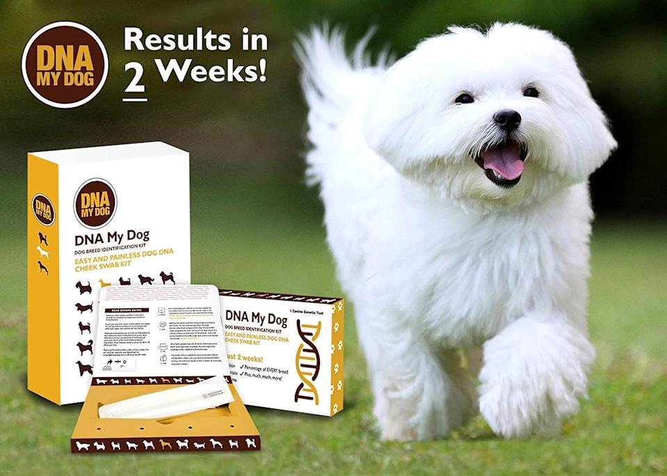 DNA My Dog. Image via Amazon.