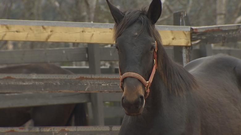 How a horse from P.E.I. found a new home with a boy with autism