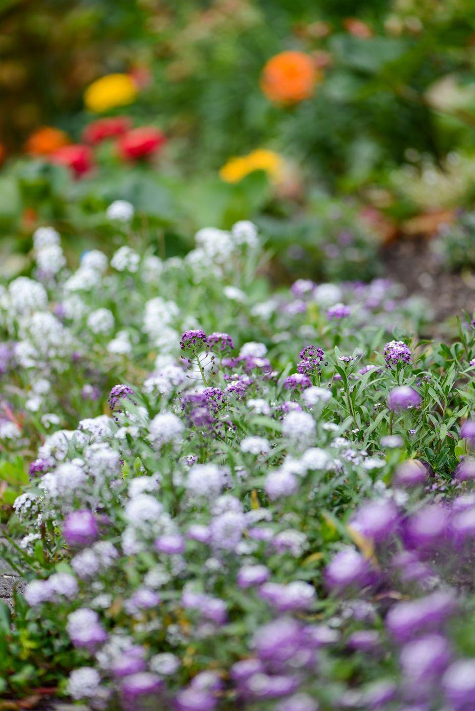 These Stunning Fall Flowers Will Make Your Garden the Best ...