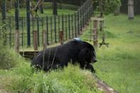 Vietnam to rescue 1,000 bears in bid to end bile trade