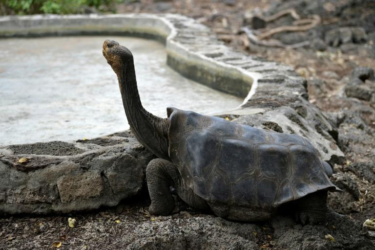 One quarter of the 2,900 species on the Galapagos Islands - including the giant tortoise - are endemic to the archipelago