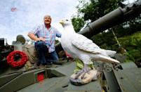 """Gary Blackburn, a 53-year-old tree surgeon from Lincolnshire, Britain, poses atop of a demilitarised Centurion tank decorated with peace doves at his British curiosities collection called """"Little Britain"""" in Linz-Kretzhaus, south of Germany's former capital Bonn, Germany, August 24, 2017. REUTERS/Wolfgang Rattay"""