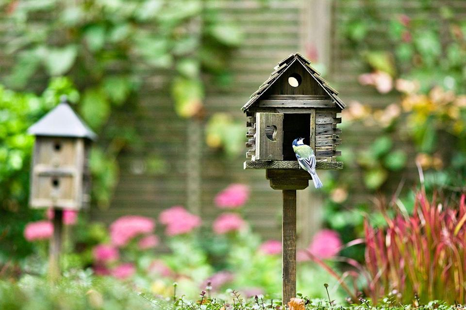 "<p>Want to feel like a Disney princess by waking up to the sounds of birds chirping outside your window? <a href=""https://www.goodhousekeeping.com/home/gardening/tips/g3551/landscaping-ideas/"" rel=""nofollow noopener"" target=""_blank"" data-ylk=""slk:Make your yard a welcoming place"" class=""link rapid-noclick-resp"">Make your yard a welcoming place</a> for local wildlife by installing bird feeders. It'll make you feel more harmonious with nature and give you something to look at while you enjoy your morning coffee. </p>"