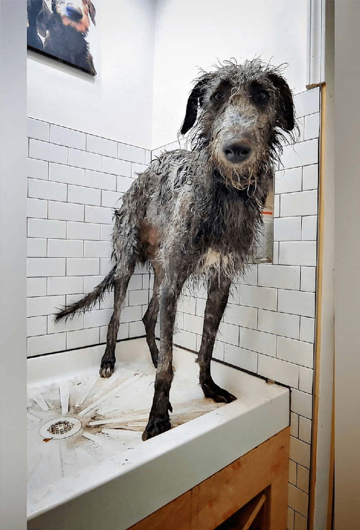 """<p>This one is certain to make you smile! Research by the team also found that a third of those with a furry family member regularly give them a massage when bathing them, but do you? </p><p><strong>READ MORE</strong>: <a href=""""https://www.countryliving.com/uk/wildlife/pets/a32047729/groom-dog-at-home/"""" rel=""""nofollow noopener"""" target=""""_blank"""" data-ylk=""""slk:5 expert tips to help you groom your dog at home"""" class=""""link rapid-noclick-resp"""">5 expert tips to help you groom your dog at home</a><br></p>"""