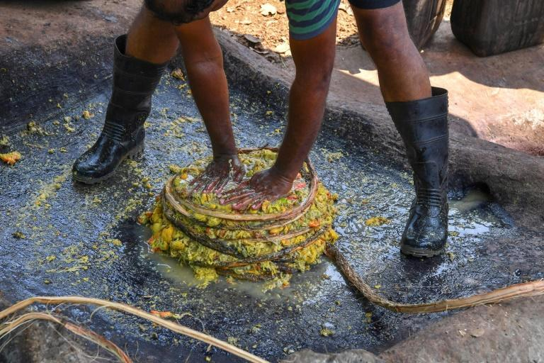 At Cazulo the cashew apple -- its nut removed -- is dumped into a stone basin carved into the ground