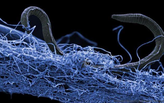What is lurking beneath the surface? (Getty)