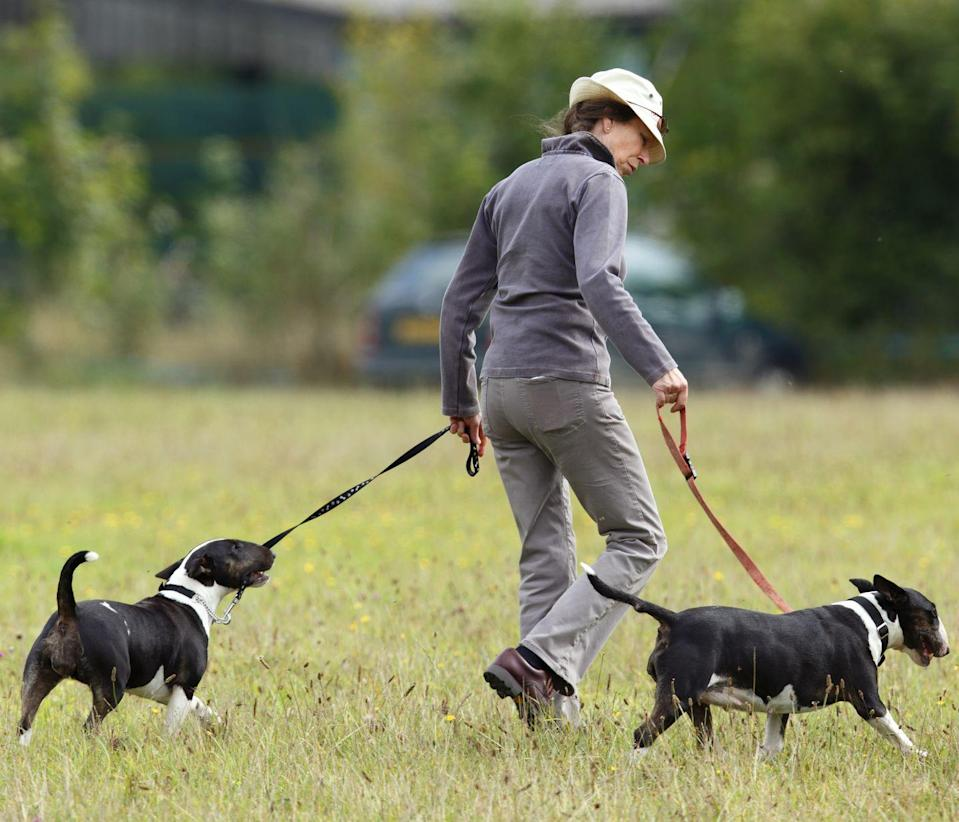 <p>Princess Anne has been caring for English Bull Terriers for decades—a very on-brand breed of choice for the famously outdoorsy, no-frills royal.</p>