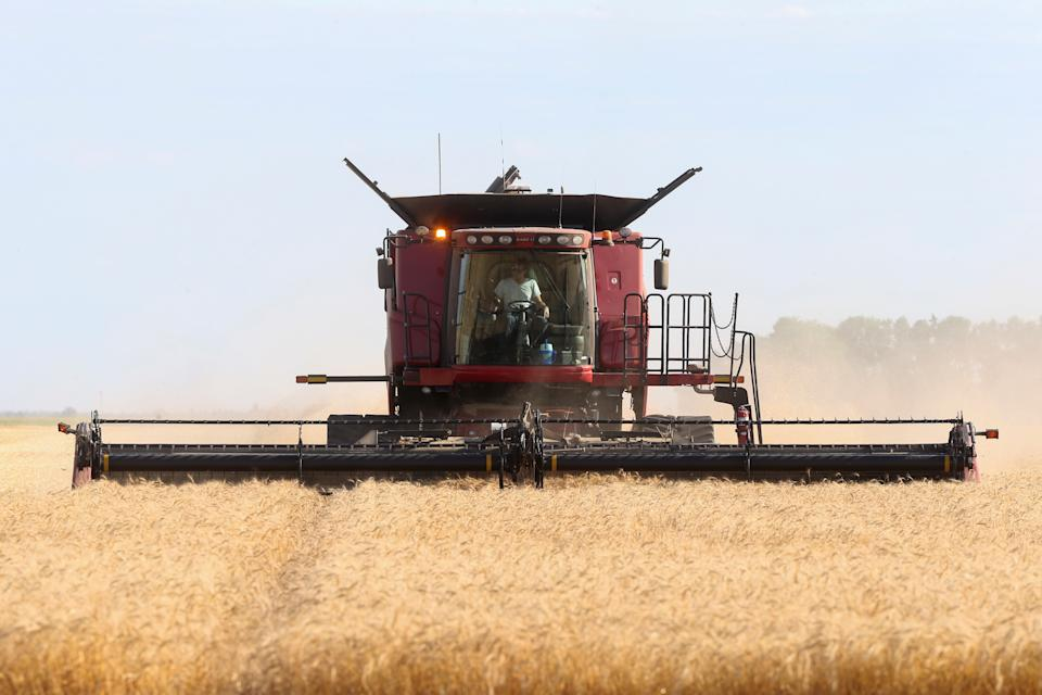 Spring wheat is harvested on a farm near Beausejour, Manitoba, Canada August 20, 2020.  REUTERS/Shannon VanRaes