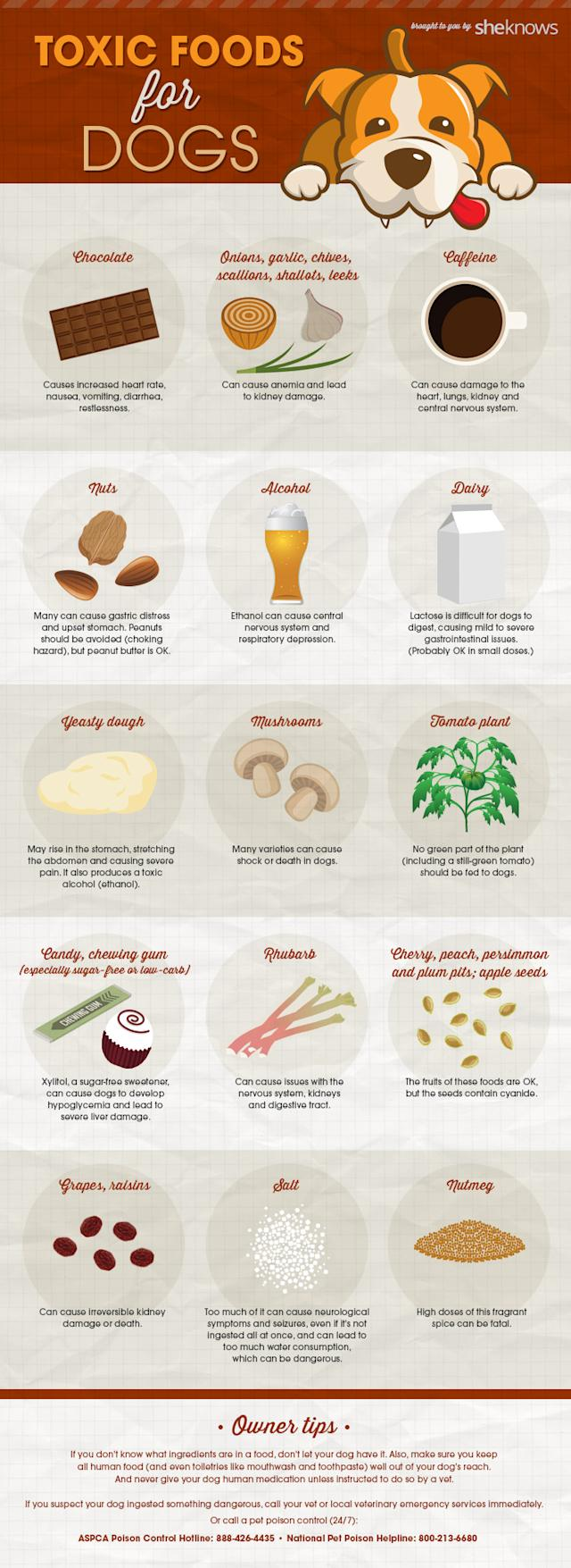 infographic showing what foods are toxic to dogs