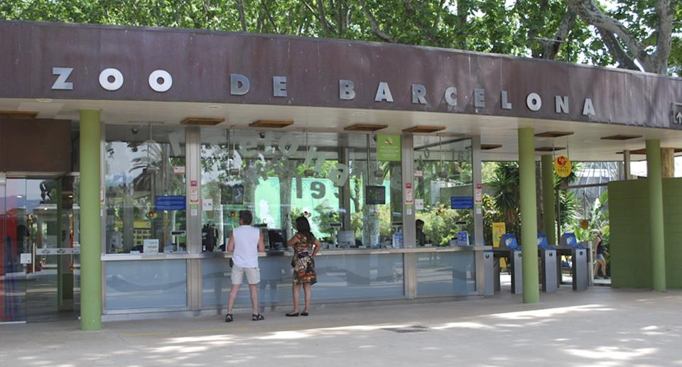 Barcelona zoo where staff and lions have tested positive to coronavirus
