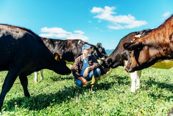 PHOTO: President of Rogue Creamery David Gremmels with the cows at his creamery. (Beryl Striewski for Rogue Creamery)