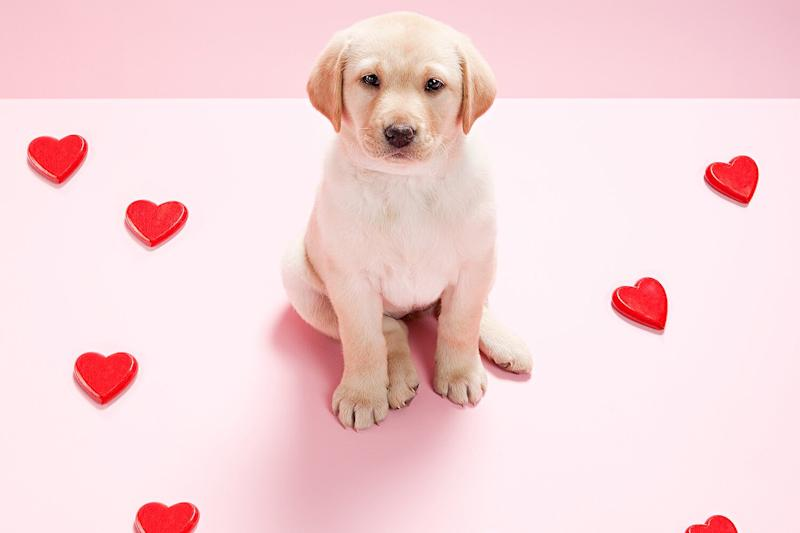 Tenn. Animal Shelter Will Bring a Precious Puppy to Your Loved One's Office for Valentine's Day