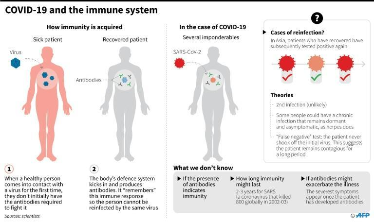 COVID-19 and the immune system