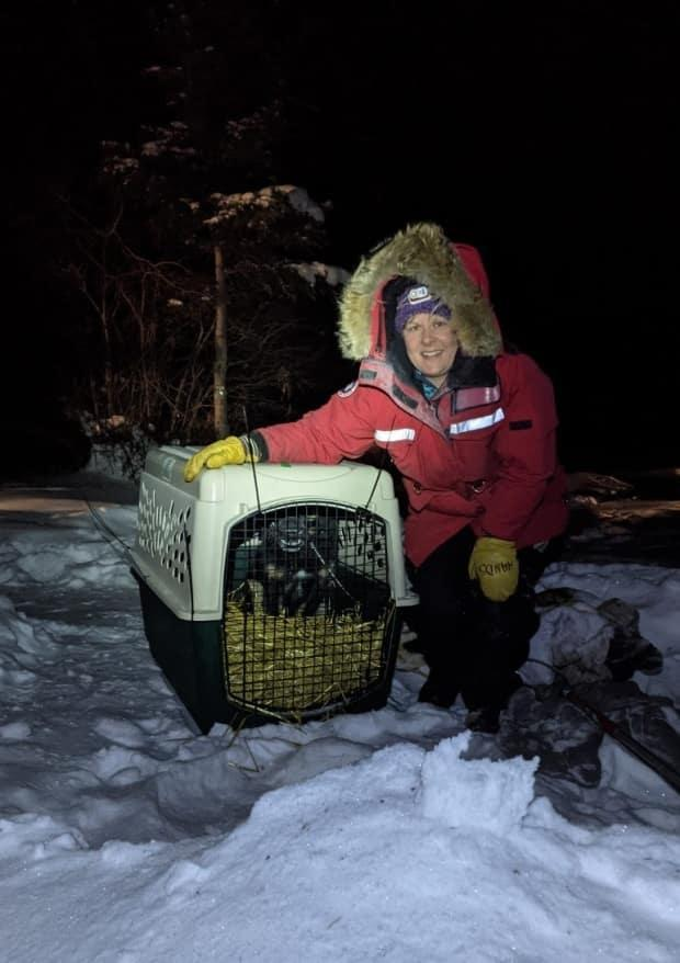 Tia Hanna captured Minky Three-Paws near Frank Channel after weeks of laying out traps for the stray dog.