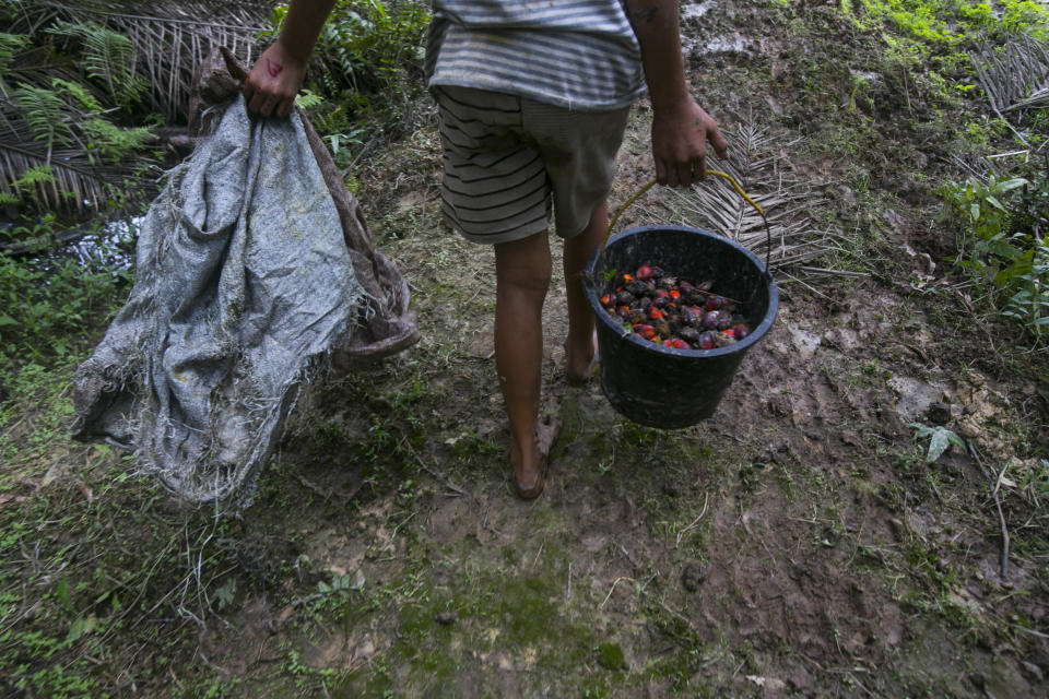 A little girl carries a bucket of palm oil fruit she collected on a plantation in Sumatra, Indonesia, Nov. 13, 2017. Workers who fail to meet impossibly high quotas can see their wages reduced, forcing entire families into the fields to make the daily number. (AP Photo/Binsar Bakkara)