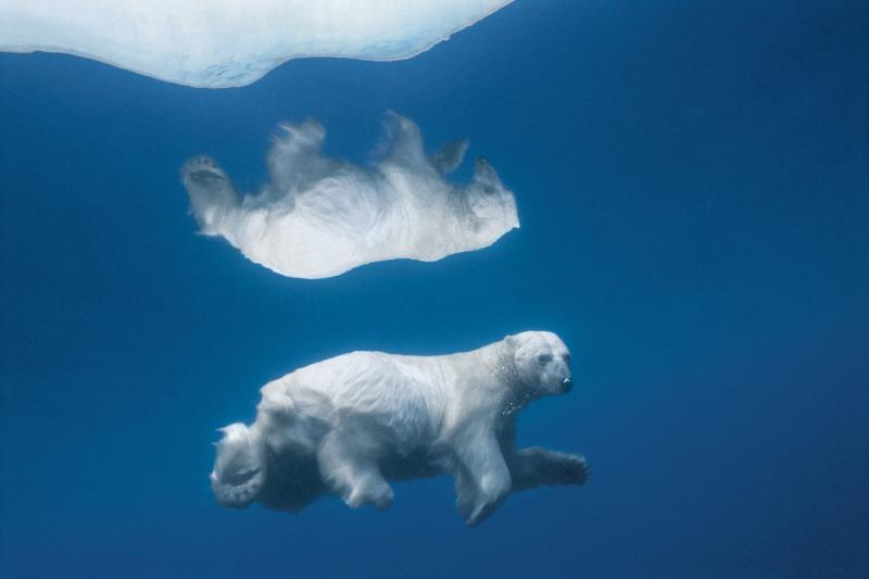 Polar Bears and Climate Change: The Photographs That Moved Them Most