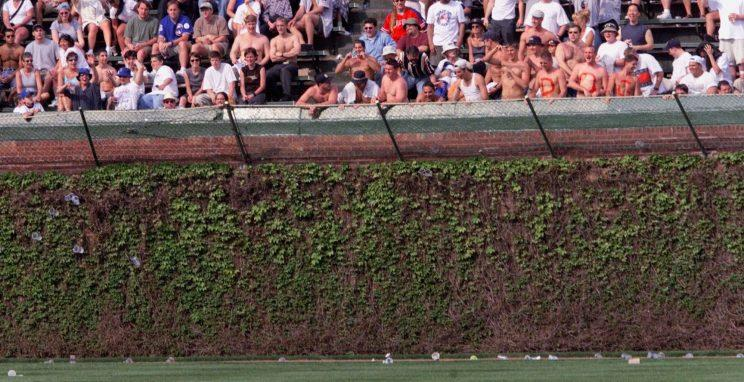 Now you can own a piece of the Wrigley Field ivy. (AP Photo)