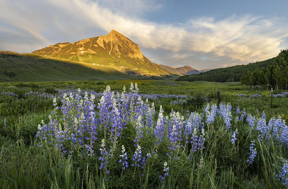 Wildflowers in the foreground with mountains in the distance