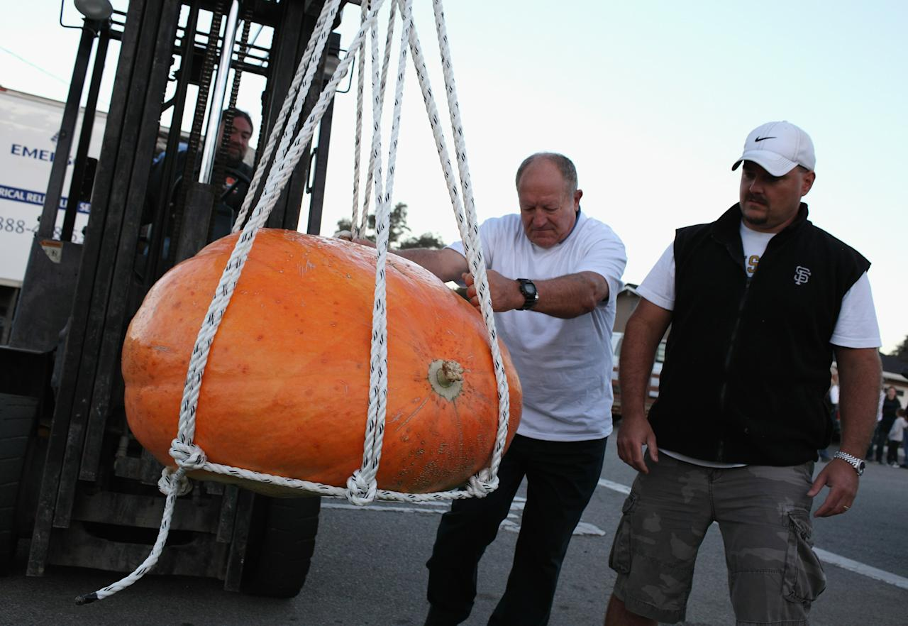 HALF MOON BAY, CA - OCTOBER 11:  Workers use a forklift to move a giant pumpkin during the 37th Annual Safeway World Championship Pumpkin Weigh-Off on October 11, 2010 in Half Moon Bay, California. Ron Root of Citrus Heights, California won the competition with a 1,535 pound pumpkim and took home $9,210 in prize money equal to $6 a pound.  (Photo by Justin Sullivan/Getty Images)