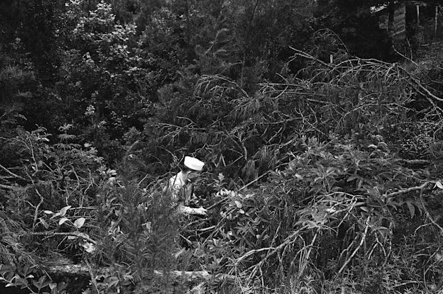 <p>A sailor from the Meridian NAAS pokes through the underbrush near Philadelphia, Miss., in search for three missing civil rights workers whose burned out car was found in the area on Tuesday, June 27, 1964. (Photo: AP) </p>