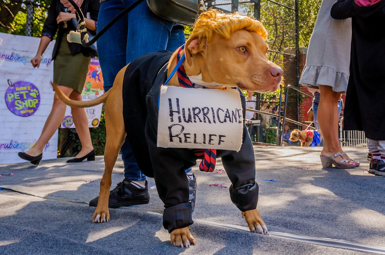 <p>The 27th Annual Tompkins Square Halloween Dog Parade was held on Oct. 21, 2017. Thousands of costumed canines and spectators marched on Tompkins Square Park to participate in the countrys largest Halloween (Photo: Erik McGregor/Pacific Press/LightRocket via Getty Images) </p>