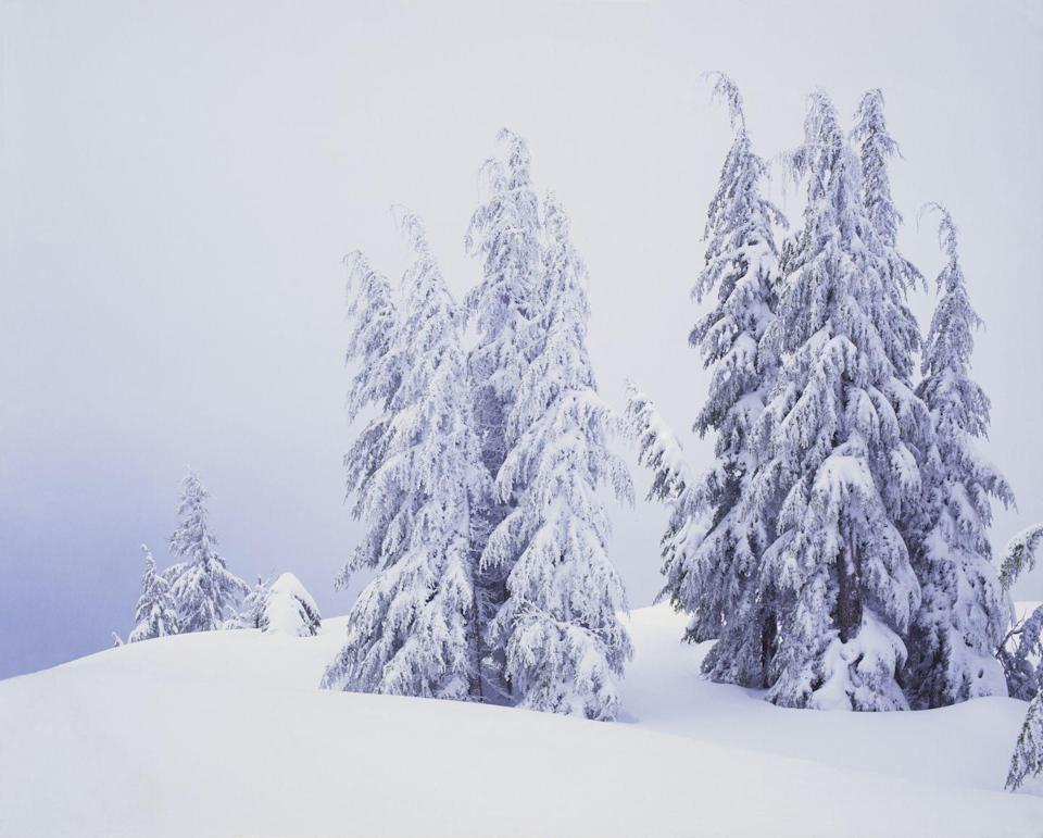 <p>During winter, most of the trees in Crater Lake National Park are covered in snow and ice. Here, evergreen trees stand tall in the middle of a snowstorm. </p>