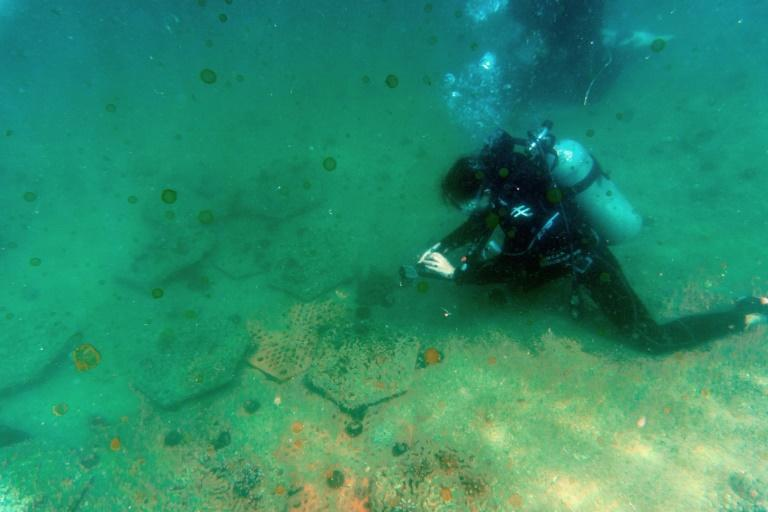 Scientists say around 84 species of coral are found in Hong Kong's waters
