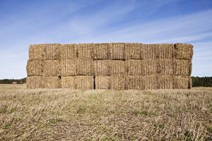 Hay bales wrapped with agricultural baler twine are stacked and stored for use as livestock feed.